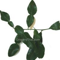 Fresh Kaffir Lime Leaves 1.5 oz